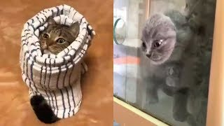 *CATS THAT WILL MAKE YOU LAUGH SO HARD! | FUNNY CATS VIDEO*