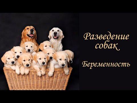 Вопрос: Как разводить собак?