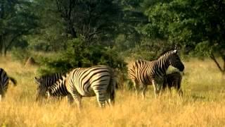 Afrique du Sud - Province du Limpopo