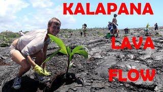 Kilauea Lava Flow Restoration Kalapana Hawaii Kaimu Beach