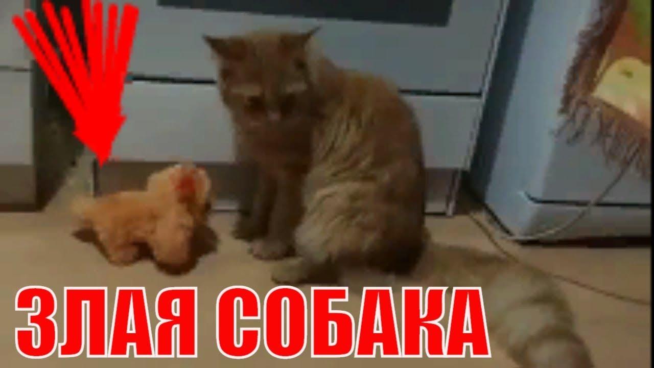 Кошка против злой собаки Cat vs evil dog