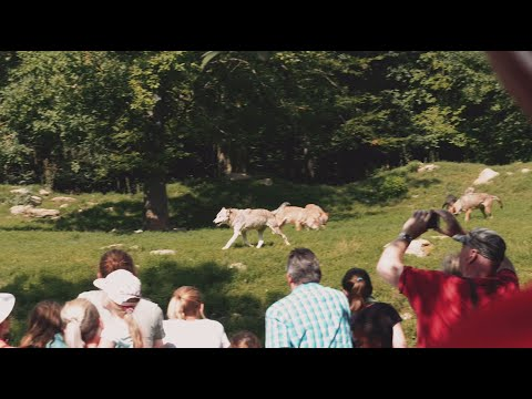 wildpark-erlebnis-in-bad-mergentheim