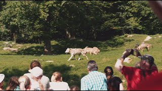 Wildpark-Erlebnis in Bad Mergentheim