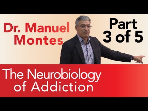 Dr. Montes: Neurobiology of Addiction Part 3 of 5 | The Treatment Center