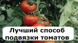 305. Идеальный вариант подвязки ТОМАТОВ и ОГУРЦОВ