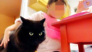 【しゃべる猫】不覚にも子どもの隣に座ってしまった猫の表情が可愛すぎた【しおちゃん】