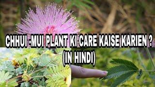 149# छूईमूई पौधे की देखभाल  कैसे करते हैं ?
