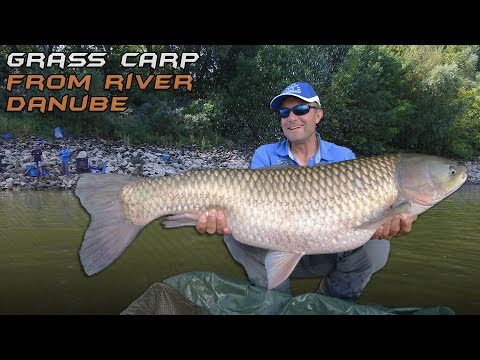Wild Water Adventures part 35.  On the Trail of Danube Grass Carp