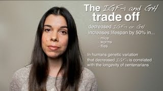The IGF-1 Trade-Off: Performance vs. Longevity