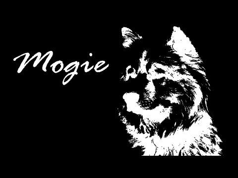 MOGIE