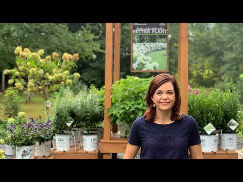 Late Summer Nursery Tour // Gardening with Creekside
