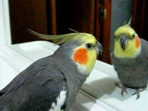 Bruno canta Famiglia Addams allo specchio.avi