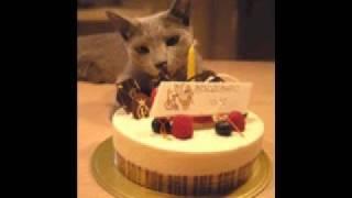 JingleCats Happy Birthday to you