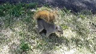 Feeding Tame Squirrel