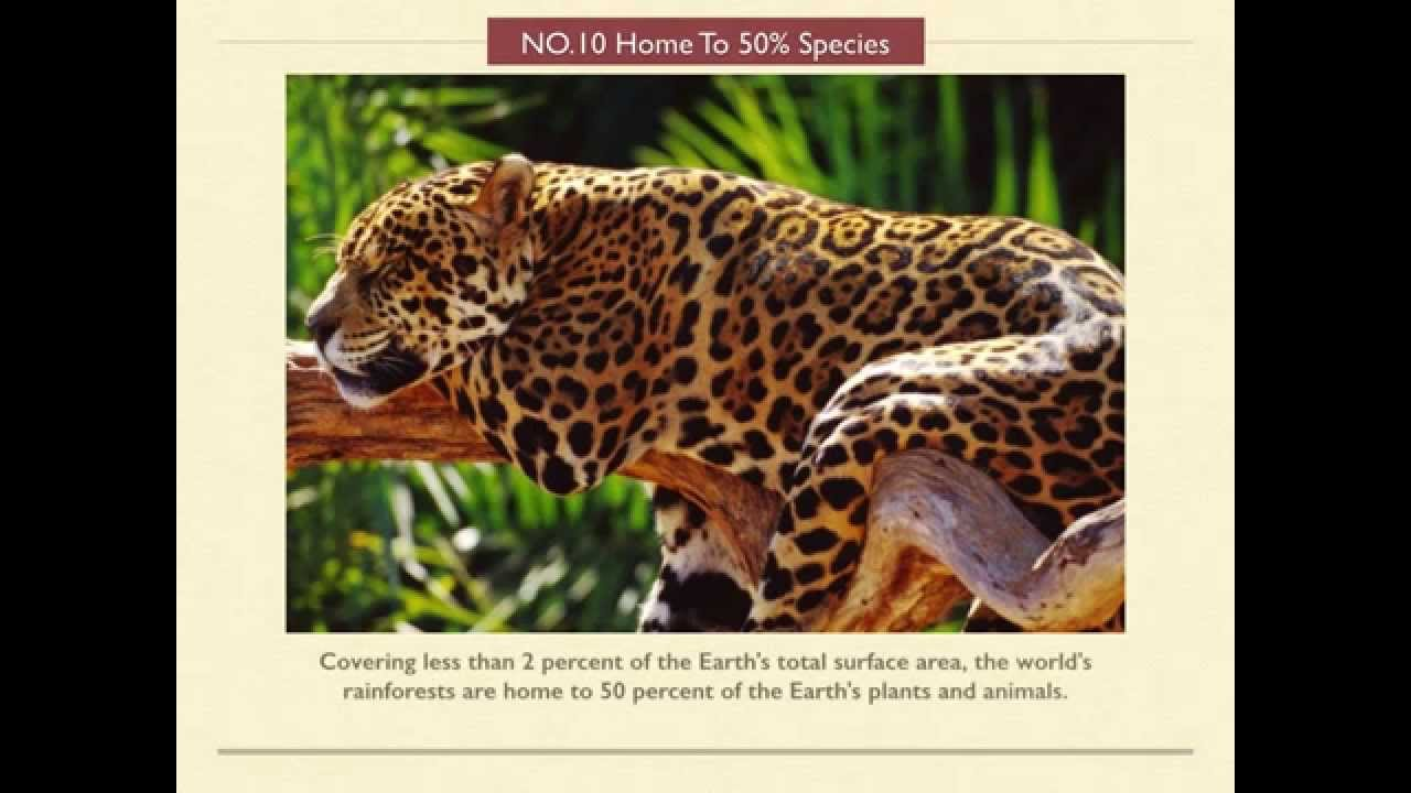 & 12 Interesting Facts About Rainforests For Kids - YouTube