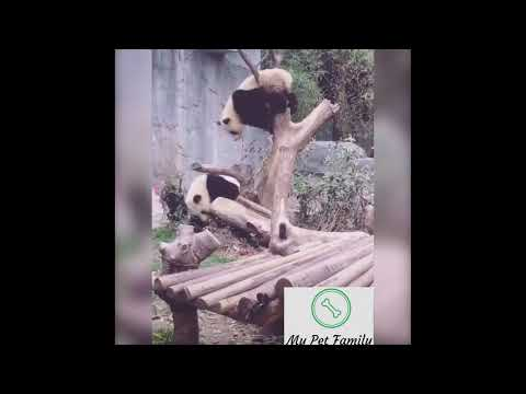 Những Chú Gấu Siêu Hài Hước. 💗