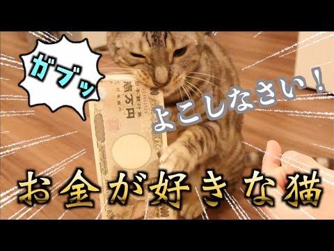 ルトの一万円札への食いつきがヤバイ!!