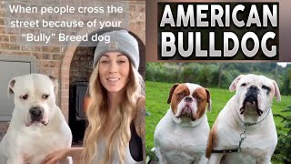 NEW American Bulldog Video Compilation (CUTE & FUNNY MOMENTS) | BULLY LOVE