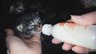 ПРИЁМНЫЕ Котята Едят С БУТЫЛОЧКИ Котятам 10 Дней