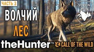 theHunter Call of the Wild #3 🐺 - Волчий Лес - Долина Юкона, Аляска