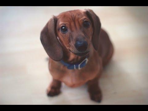 Puppy Plays Red Light Green Light!!