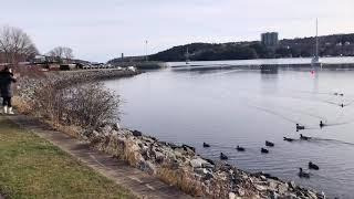 핼리팩스 11월 풍경, Halifax