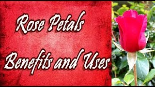 Rose Petals Benefits and Uses