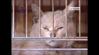 """Новых хозяев в приюте """"Майский день"""" ждет персидская кошка"""