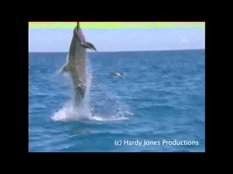 EXTREME DOLPHIN SHOOTING.