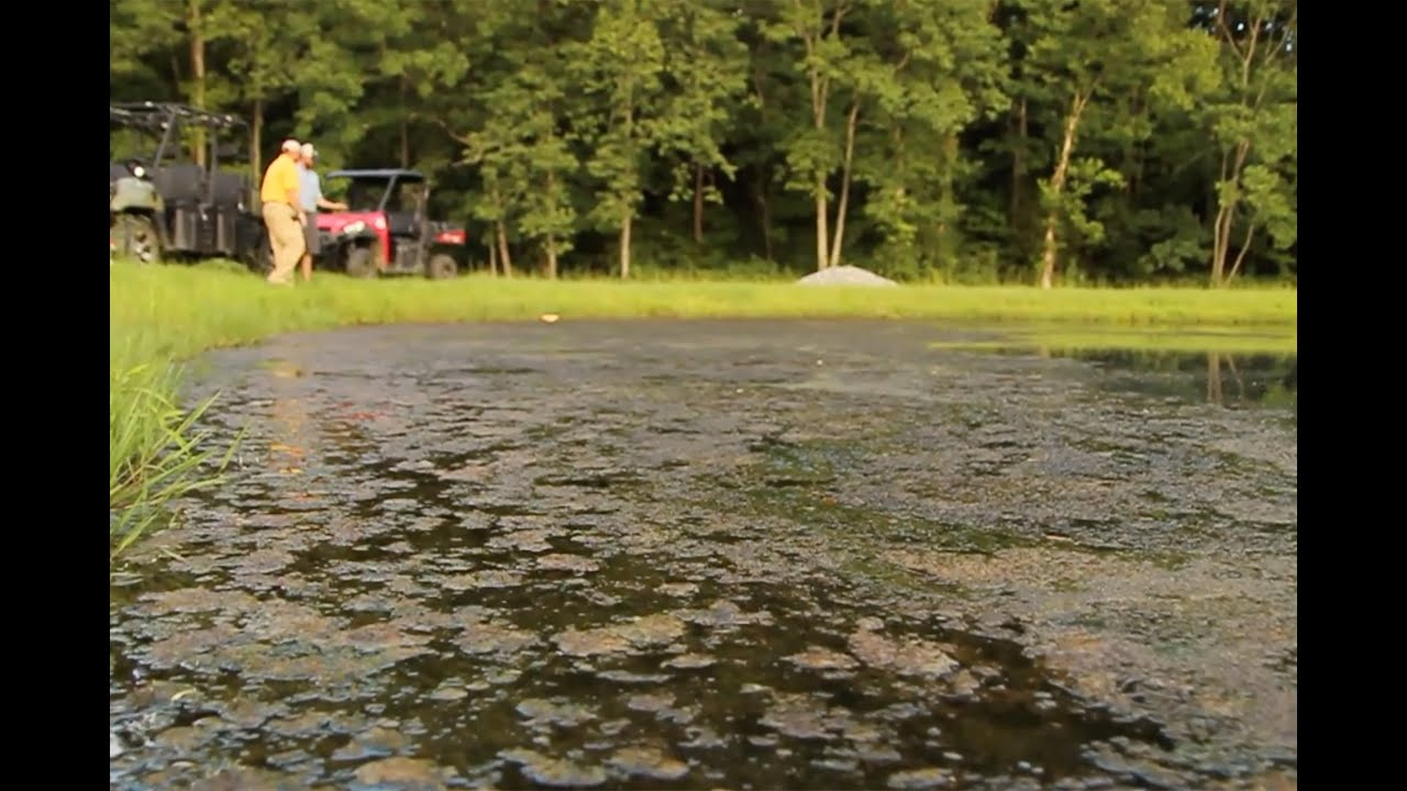 Controlling Weeds In Your Pond With Southeastern Pond
