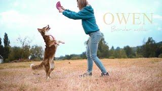 Owen Border collie  Tricks