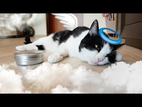 CAT'S PARADISE