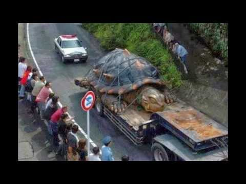 worlds largest tortoise found in amazon basin youtube