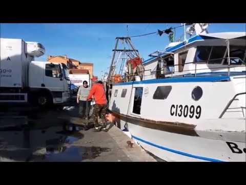 Monitoraggio dei rifiuti pescati a Chioggia (VE)