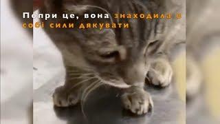 Ее спасали под кислородом : история кошки Ули. Спасение