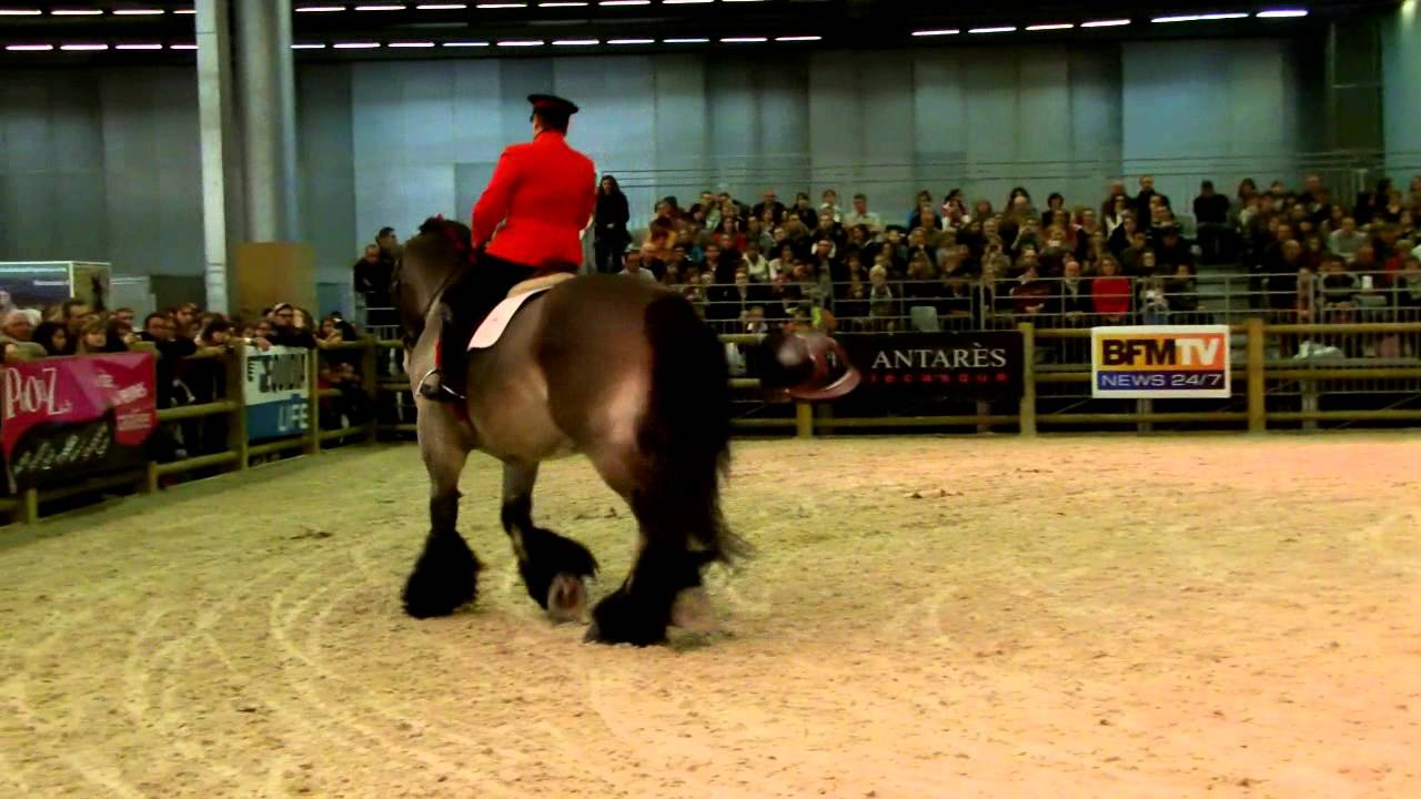 Salon du cheval de paris 2012 video youtube for Salon du cheval a paris