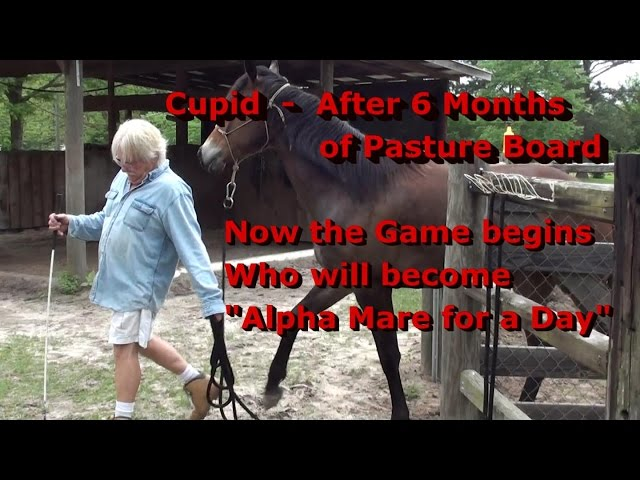 Cupid 6 Month Layoff 4 15 2015 Prior to Surgery