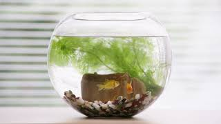Entaniya Waterproof Case WC-01 金魚