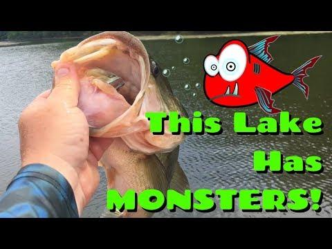 Fishing Grass For BIG Bass Watkins Mill | Catching Giant Bass, Bluegill, Catfish, Crappie