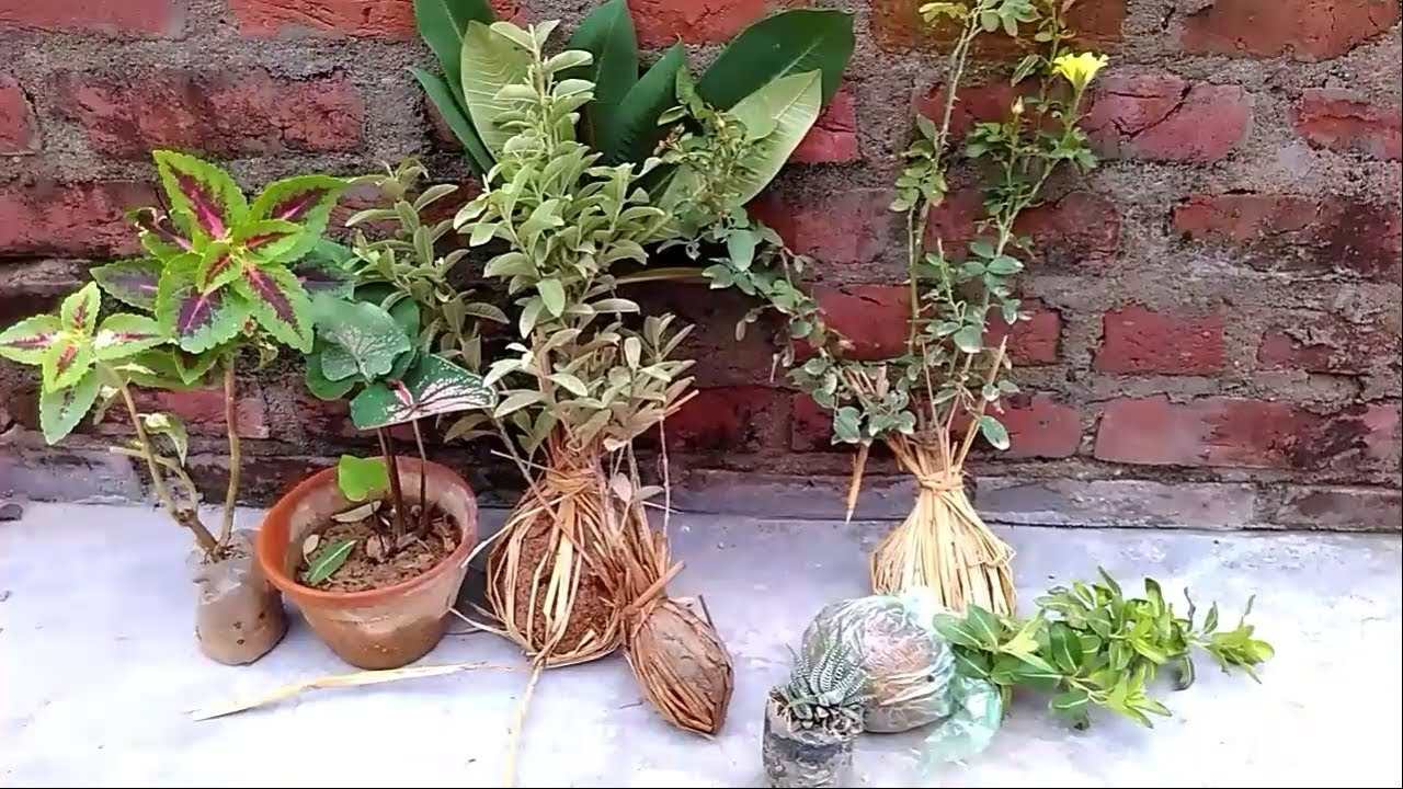 Garden Nursery Plants Plant And Tree Local Urdu Hindi