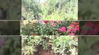 Bhojpuri gana naya all vidio(6)