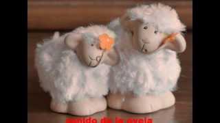 sonido de la oveja.
