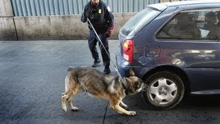 Drug-Sniffing Dogs Could Warrant Home Searches