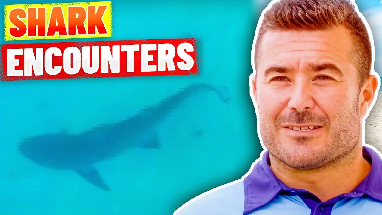 Download SHARK ALARM! Shark Sightings at Bondi Beach
