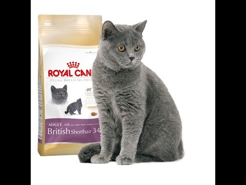 royal canin different cat breed nutrition needs. Black Bedroom Furniture Sets. Home Design Ideas