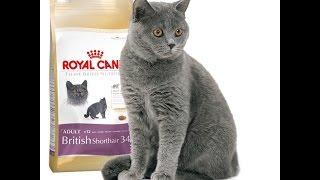 Royal Canin British Shorthair 34 Сухой корм Роял Канин Британской короткошерстной