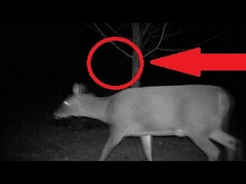 Chupacabra Attacks Deer Youtube