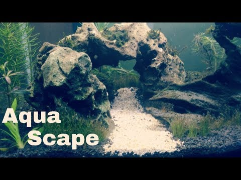 Cara Menanam Carpet Seed Aquascape YouTube - Tips dan Trik ...