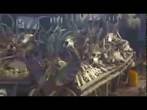 Skulls at the Fetish Market in Togo, West Africa