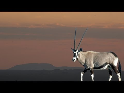 Hunting Oryx in Namibia with Blaser Safaris